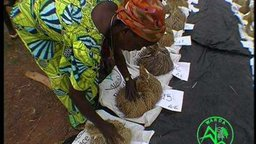 Bintu and Her New African Rice - A Genetic Bridge to Food Security and Biodiversity